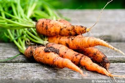 Karotte Möhre Gemüsesorten