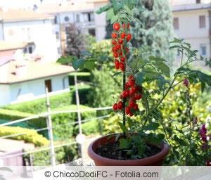 Gemüse Auf Dem Balkon Anbauen Gemüseanbau In Balkonkästen