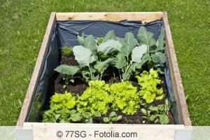 Hochbeet Richtig Schichten Befüllen Und Bepflanzen Gartendialogde