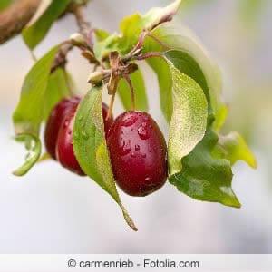 Dürlitze Früchte
