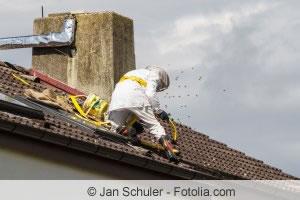 Wespennest Unter Dem Dach Dachboden Wie Entfernen Gartendialog De
