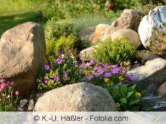 Pflanzen im Steingarten