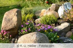 Ideale Pflanzen für den Steingarten, Kiesgarten und Kiesbeet ...