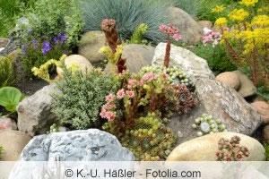 Steingarten bauen und gestalten - Anleitung und welche ...
