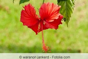 seltene Blüte