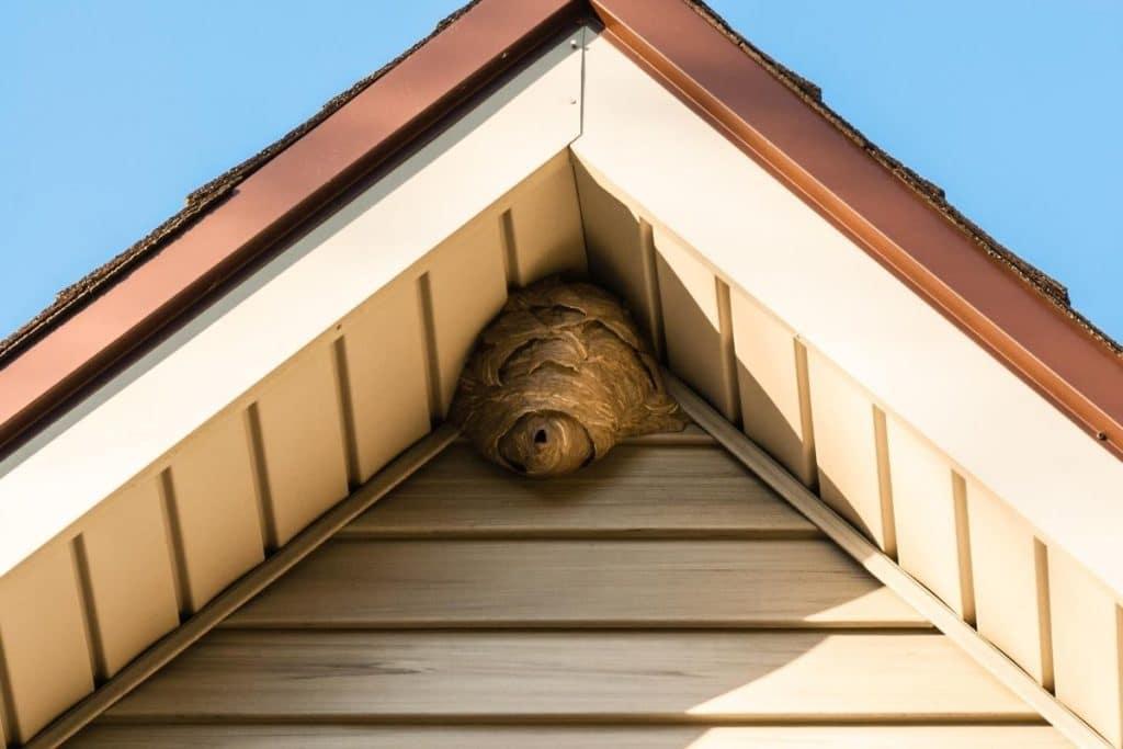 Wespennest Dach