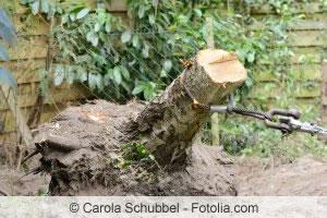 Baumstumpf Entfernen Anleitung Alternativen Wie Bepflanzen