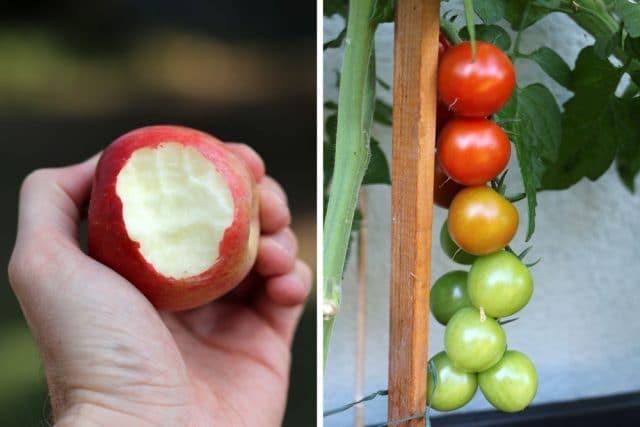 Obst Gemüse Unterschied