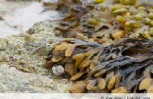 algen duenger