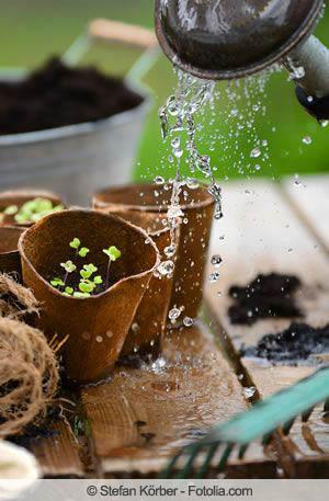 Pflanzen giessen