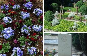 Friedhofspflanzen