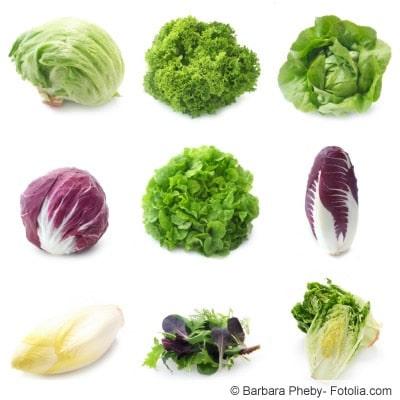 Salatsorten im Überblick