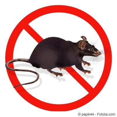 Ratten vermeiden
