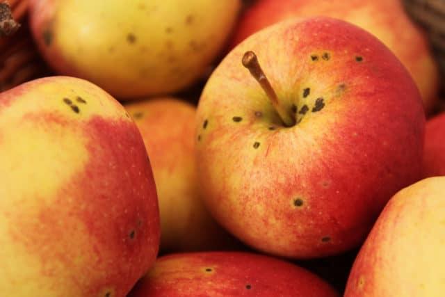 Gala-Apfel