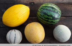 Melonensorten