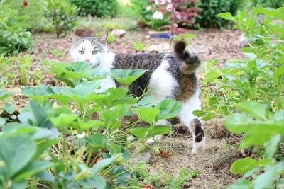 Katze im Beet