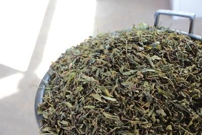 Teepflanze getrocknet