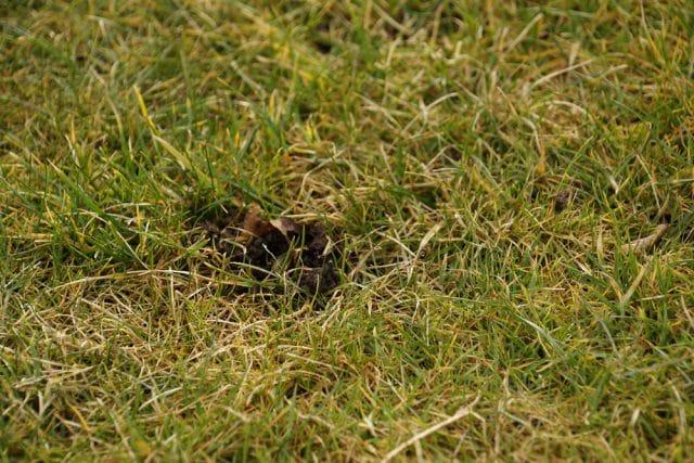 Kleine Runde Locher Im Rasen Wer War S Maus Oder Igel