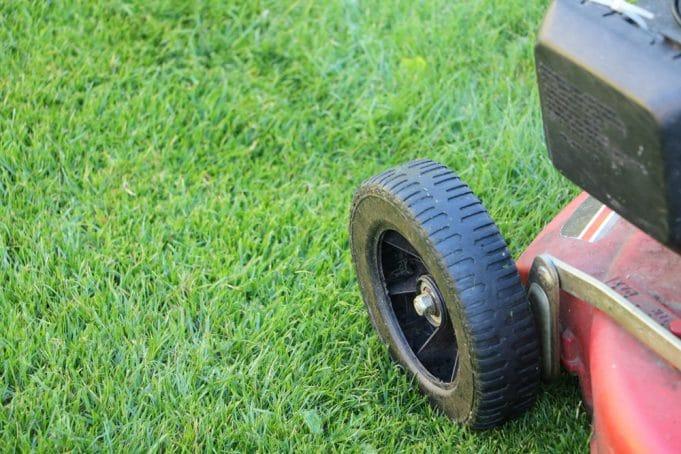 Lieblings Wann das erste Mal Rasen mähen nach Aussaat/Neusaat? - Gartendialog.de #CN_65