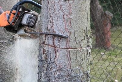 Baum mit Kettensäge fällen