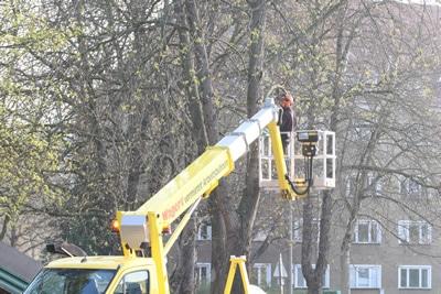 Bäume von Profis fällen lassen
