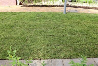 Rollrasen mit Rasenkante