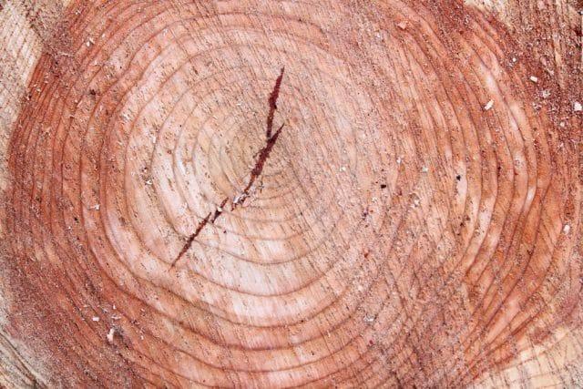Baum absterben lassen