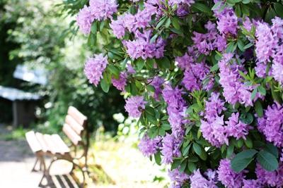 Blühende Sträucher Für Den Garten Unsere 87 Lieblinge