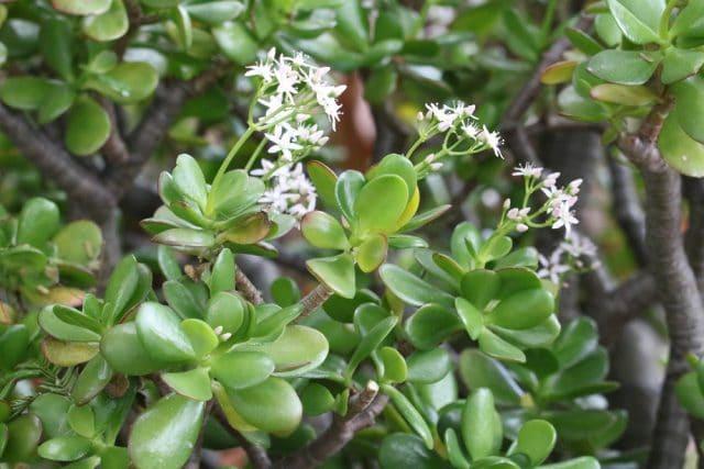 Ungiftige Zimmerpflanzen für Katzen - 44 Pflanzen für Ihre ...