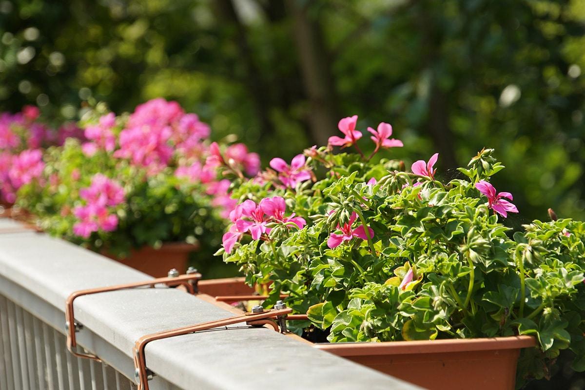 Pflanzen für die pralle Sonne   diese vertragen den heißen ...