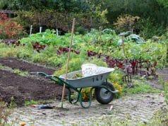 Hang Im Garten Befestigen Ideen Zur Hangbepflanzung Gartendialogde
