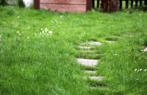 Garten Rasen