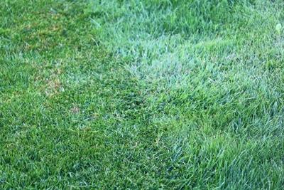 Wiese - Rasen - Gras