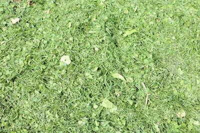 Grünschnitt Rasenschnitt