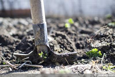 verdichteten Boden auflockern - Spaten
