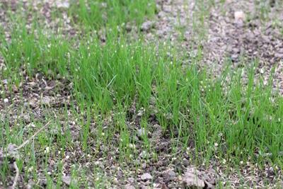 Boden für Rasen vorbereiten