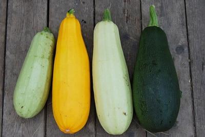 Zucchini ernten