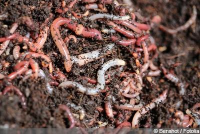 Würmer in der Blumenerde