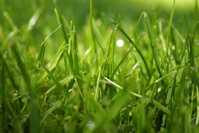 Rasen für Boden vorbereiten