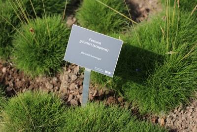 Gräser schneiden Bärenfellschwingel