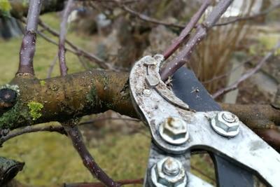 Baumschnitt versiegeln Wundverschluss