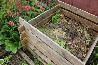 Himbeeren düngen - Kompost
