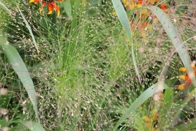 Gräser im Kübel