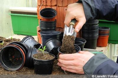 Pflanzen aus Samen ziehen