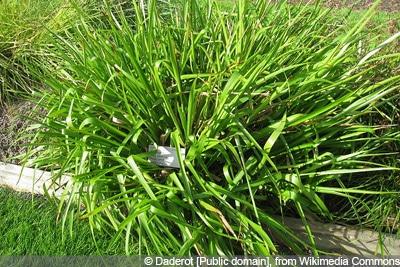 Gräser schneiden Waldmarbel