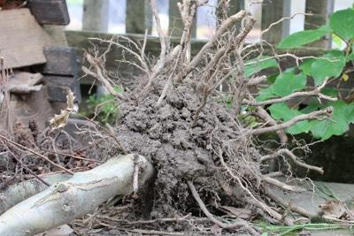 Wurzel Baumstumpf entfernen
