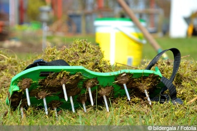 Rasen vertikutieren einjähriges Ripsengras