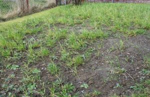Wiese Rasen Gras