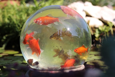 Goldfische Teich reinigen