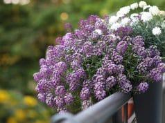 Blumenkasten bepflanzen